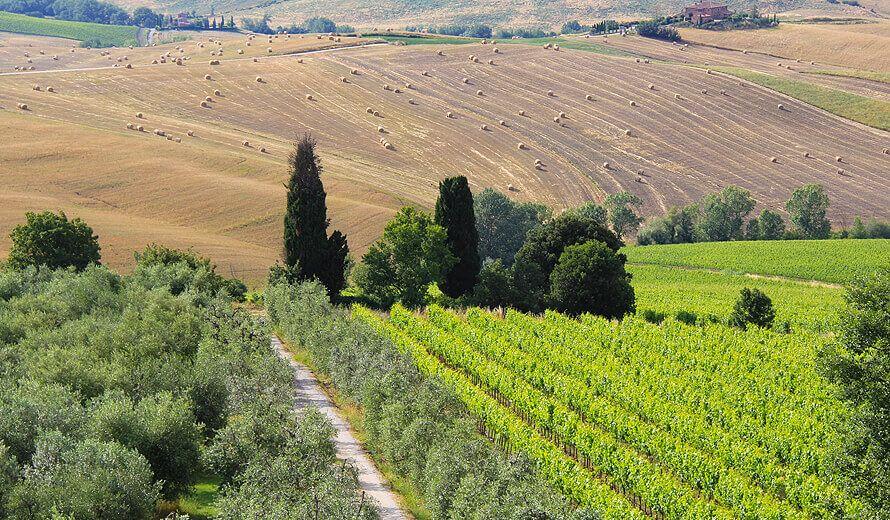 Weinanbau - exzellente Weine
